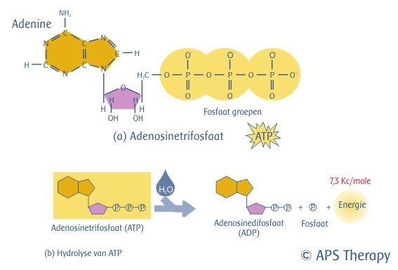 ATP Adenosinetrifosfaat APS Therapy